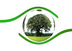 Dia Mundial Ambiente
